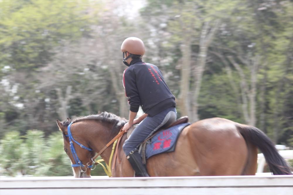 馬場でのトレーニング光景_1