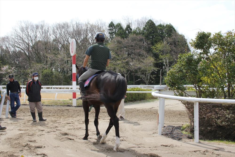 馬場でのトレーニング光景_10