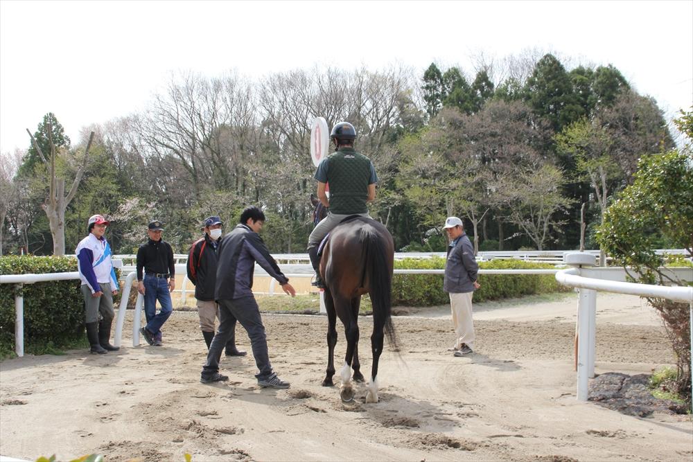 馬場でのトレーニング光景_11