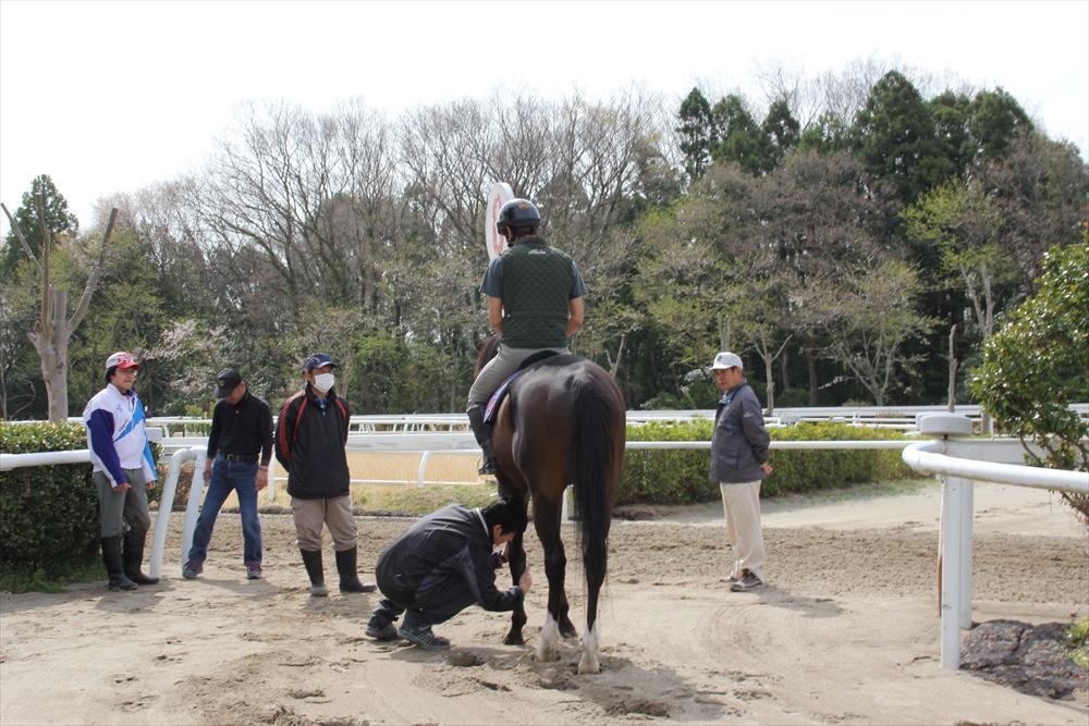 馬場でのトレーニング光景_12