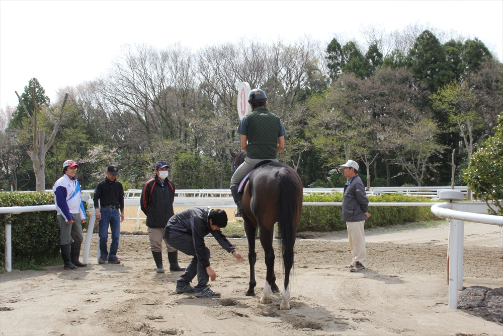 馬場でのトレーニング光景_14