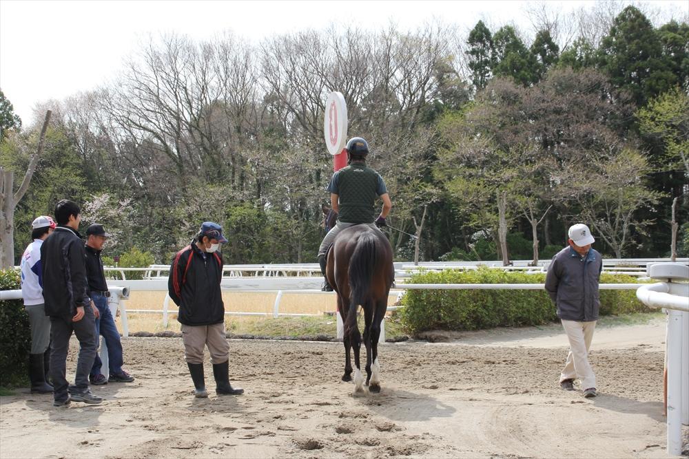 馬場でのトレーニング光景_18