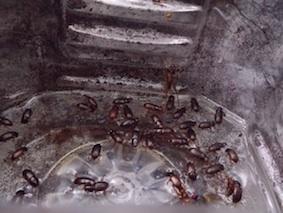 糞虫トラップウシ林内部-10