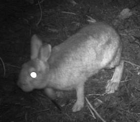 12.11.30ノウサギ-10