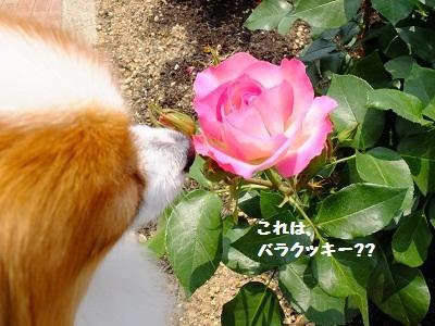 1_20120524160008.jpg