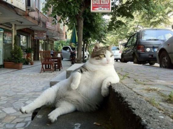 an-attitudinal-cat.jpg