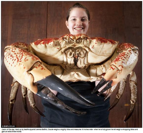 crab-monster.jpg