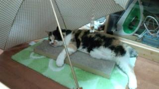日傘とたれ猫