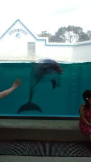 優しいイルカ