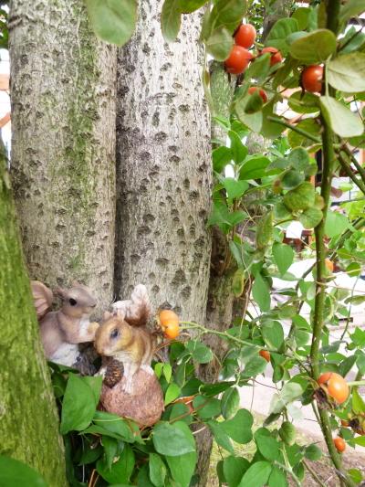ブログ なかよしリスと木の実