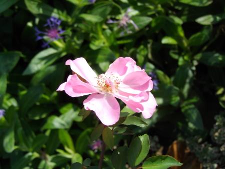 シャングリラ-ガーデン2014.10.8
