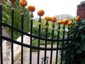 ブログ イングリッシュガーデン24 かぼちゃ