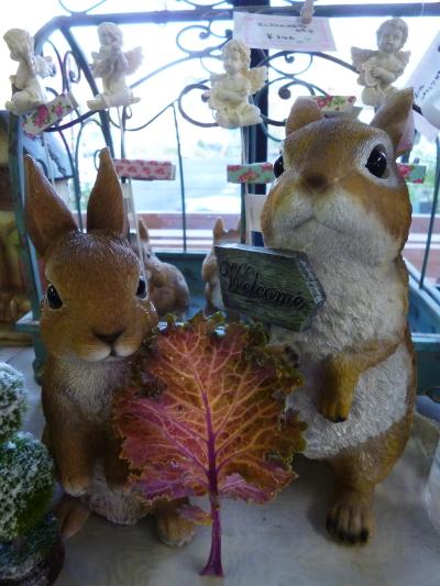 ブログ ハボタンの木