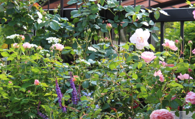 バルコニー 庭の花