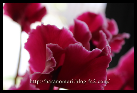 03a_20121214213909.jpg