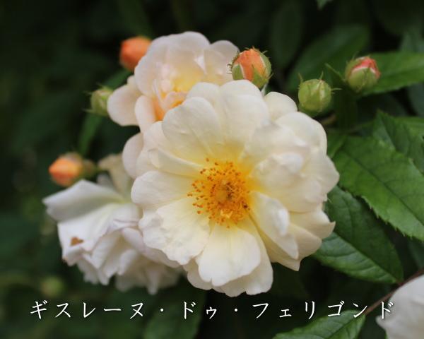06_20120601185201.jpg