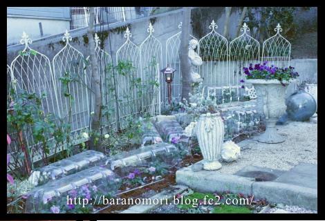 庭の花 寝室前