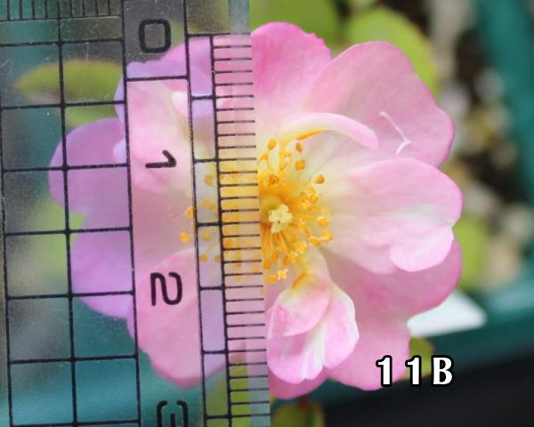 交配 11B 20120530