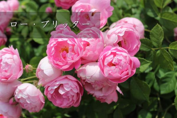14_20120601185400.jpg
