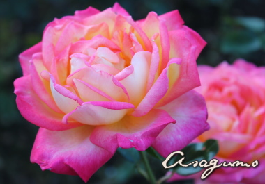 14_20121023083814.jpg