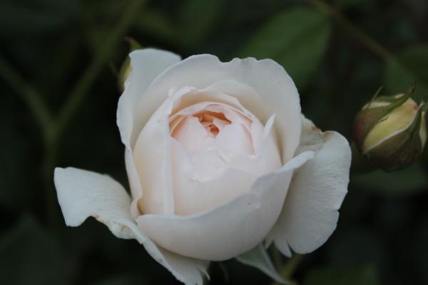 クレアオースチン 20120521