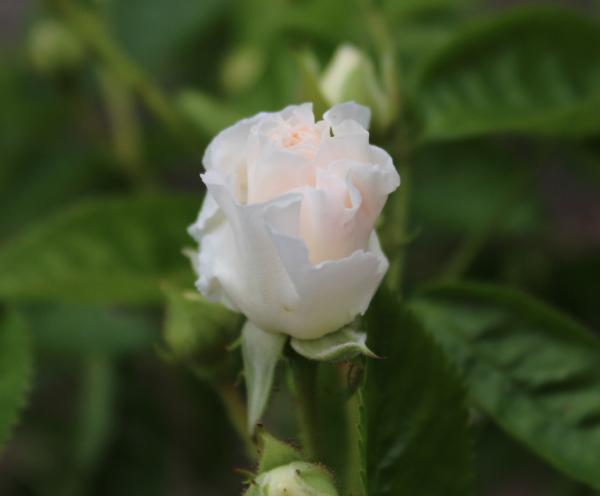 サマースノー 20120522