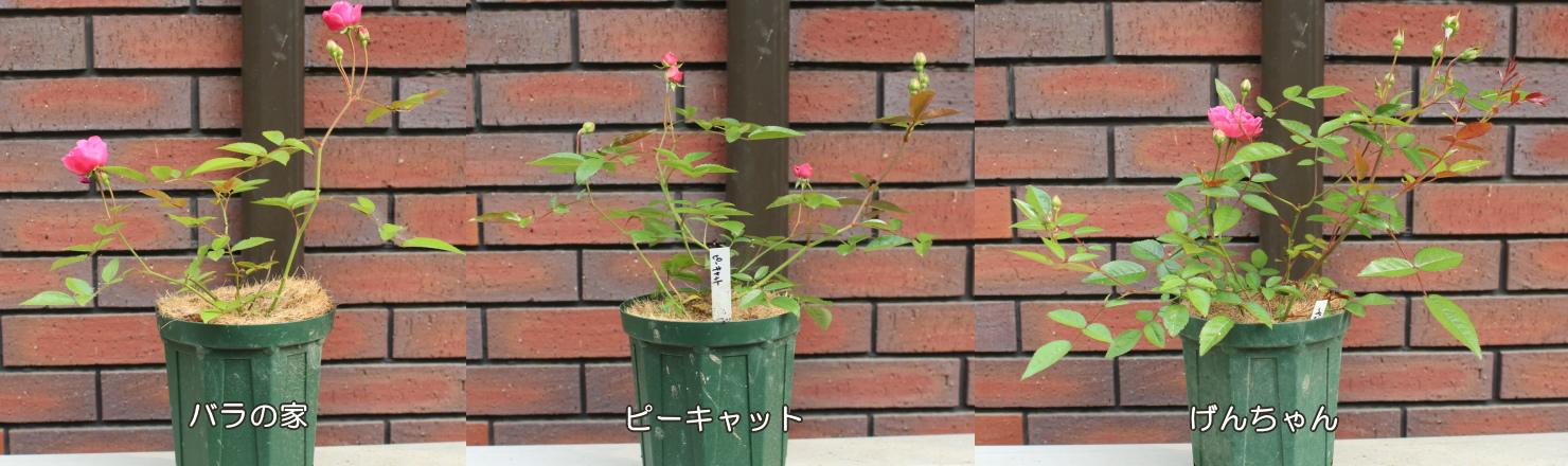 バラピーげん 土 201200525