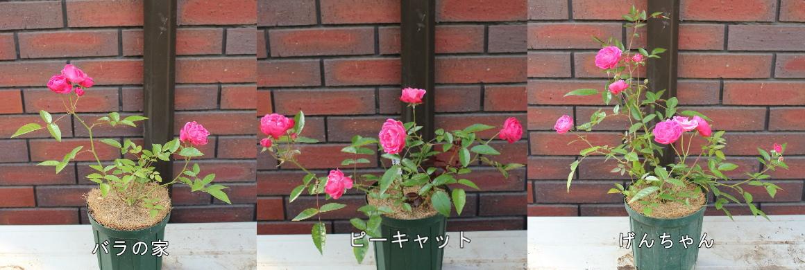 バラピーげん 土 20120603