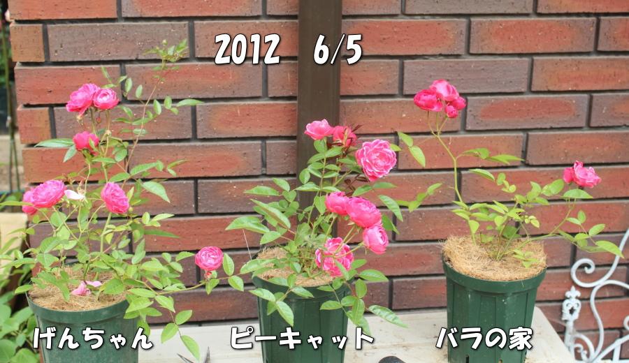バラピーげん 土 20120605