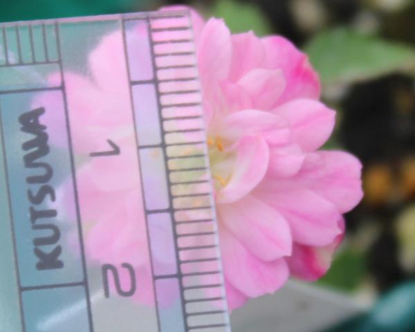 交配 12G 20120610