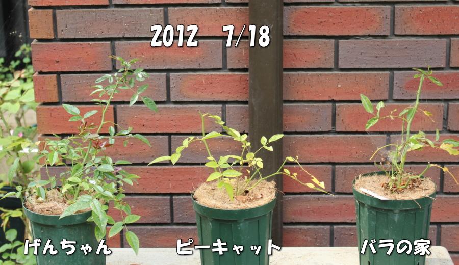 バラピーげん 土 20120718