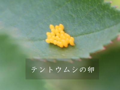 テントウムシ 益虫