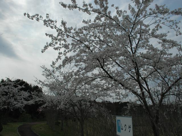 DSC_2748.jpg