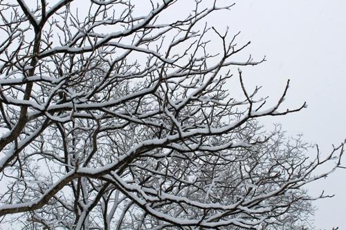 tree-20141213-01.jpg