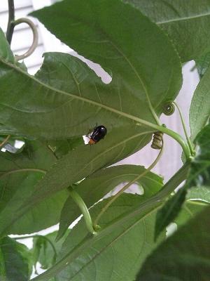葉につく虫