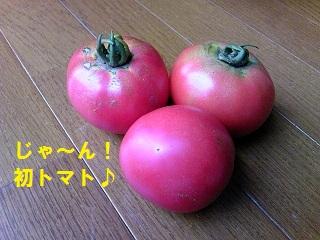 2012062906.jpg