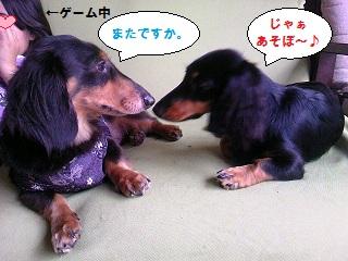2012071502.jpg