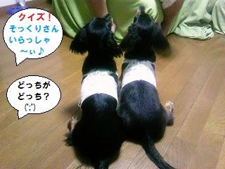 2012082502.jpg