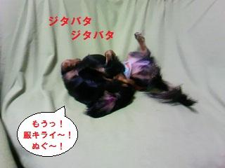 2012082903.jpg