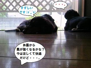 2012091702.jpg
