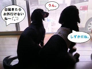 2012092902.jpg