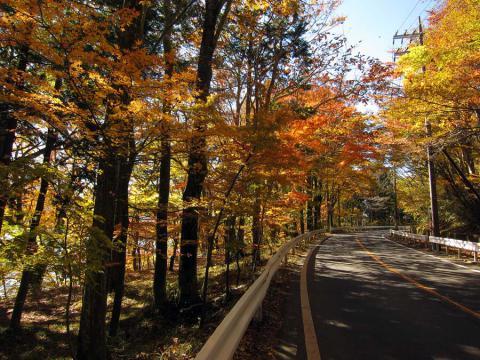 山中湖畔の道1