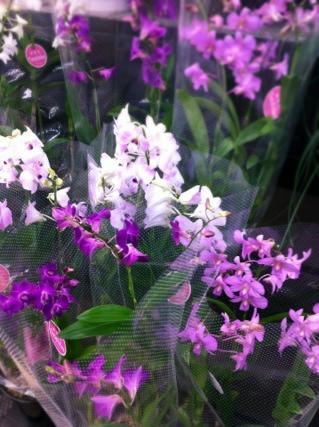 fc2blog_20120928182424e3e.jpg