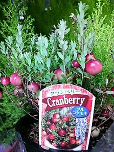 fc2blog_20121019174319ddc.jpg