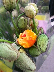 fc2blog_20121207183056393.jpg
