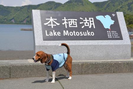 20120520本栖湖16