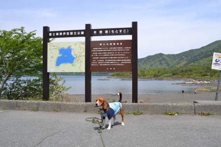 20120520本栖湖15
