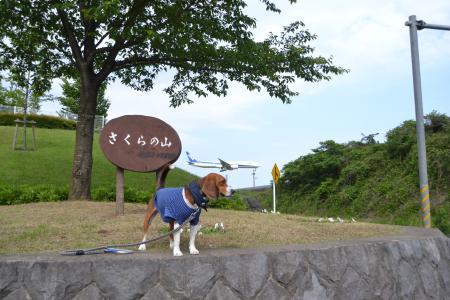 20120528さくらの山03