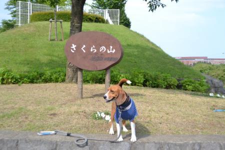 20120528さくらの山01