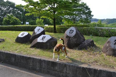 01120531富士見台公園04
